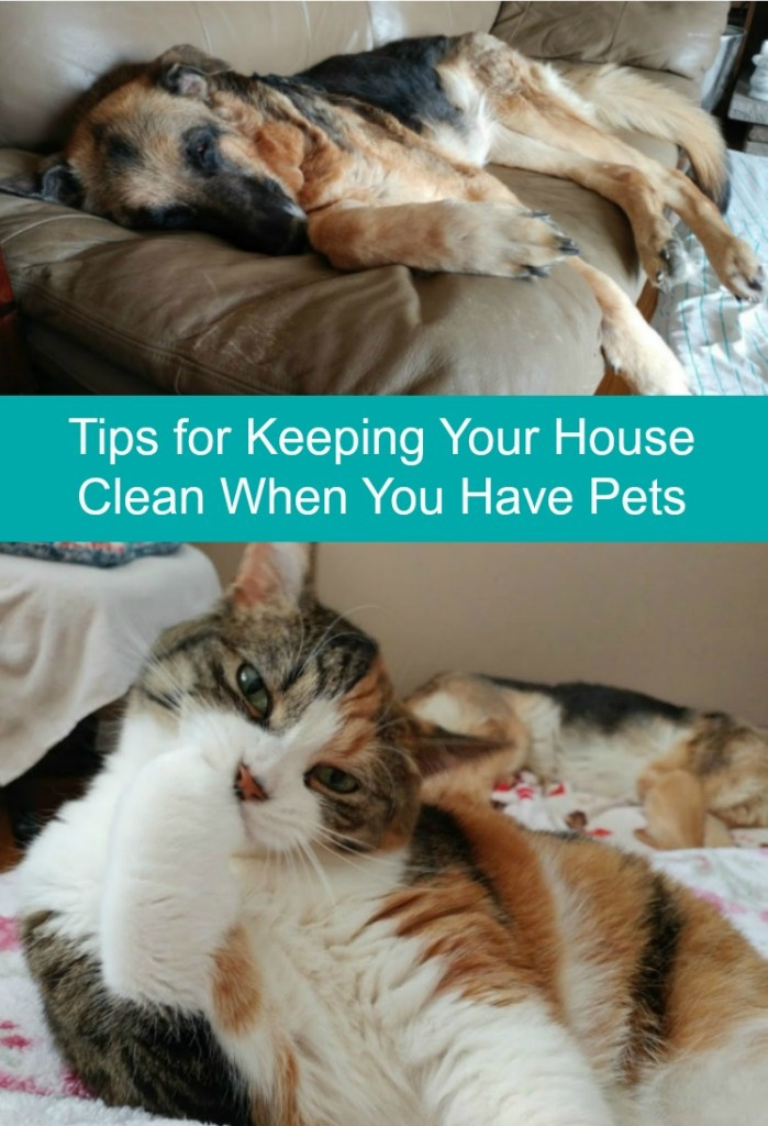 Tips to Keeping Your House Clean When You Have Pets
