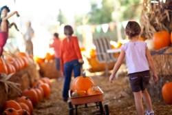 choosing pumpkins for carving