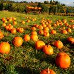 London Area Pumpkin Patches