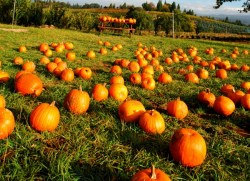 london ontario pumpkin patches