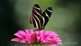275-butterflies-actually-help-plants