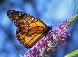 Beautiful-Butterfly-On-Flower-