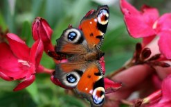 Most_Beautiful_Flowers_With_A_Butterfly_Desktop_Wallpaper
