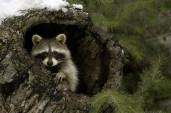 Animals-beautiful-nature-23474202-900-600