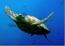 Turtle-Ten-Most-Beautiful-Animals_thumb1