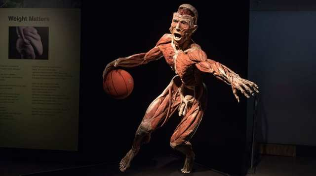 Body Worlds Vital Exhibition Heads to Cape Town
