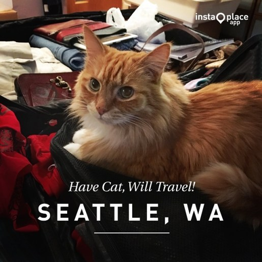 Have Cat, Will Travel!