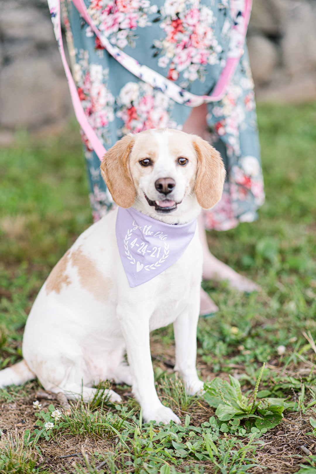 Dog with save the date scarf