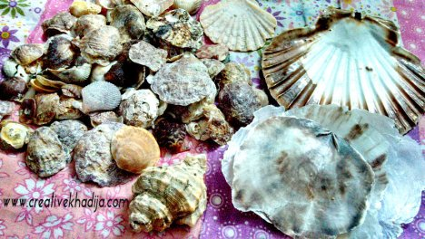 cadiz beach shells in pakistan