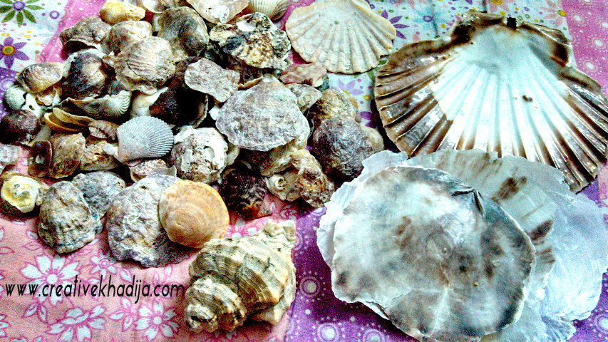 shells from cadiz beach shells in pakistan
