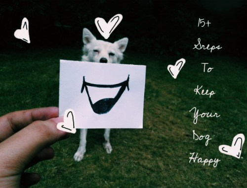 15+ Steps To Keep Your Dog Happy and Comfortable