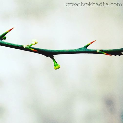 instagram-photography-creative-khadija-clicks