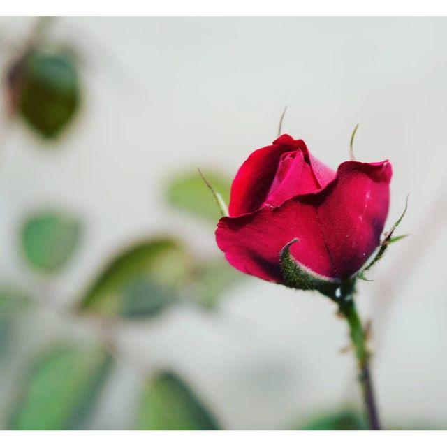 creative-mind-khadija-instagram-photography