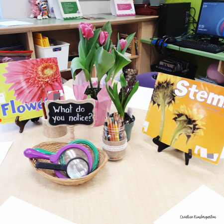 Inspire your students to question and investigate plants with this invitation for learning. Find out how you can be successful when setting up your own invitations.