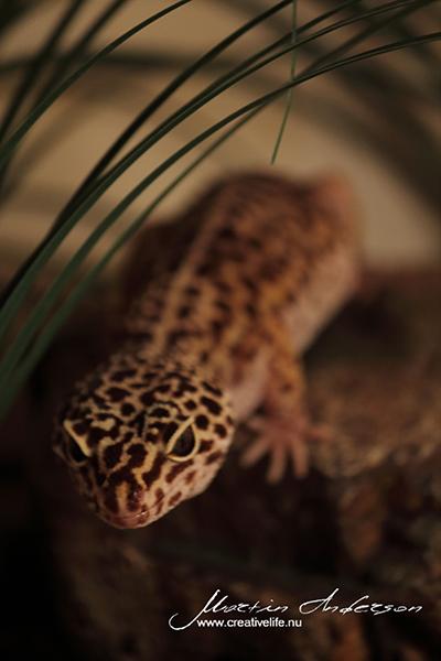 reptile 04