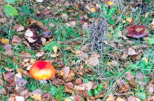 Nature spotting - mushroom