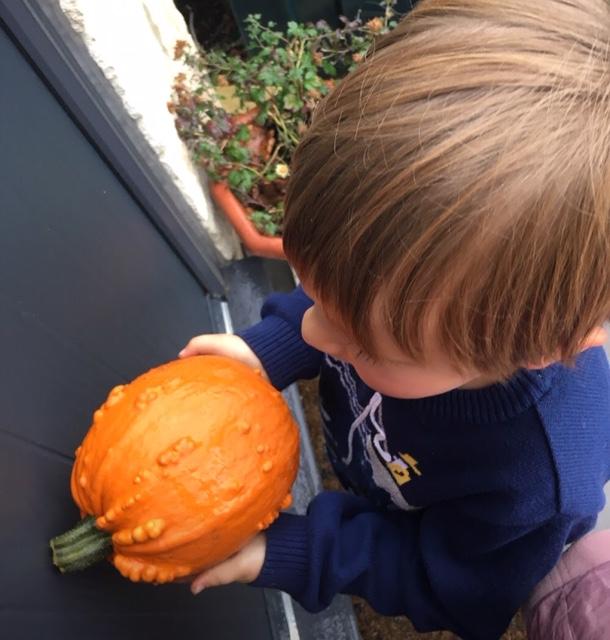 knobbly pumpkin - autumnal orange