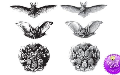 vectorbats