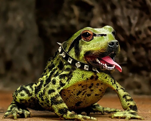 frog-repitile