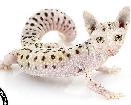 geck-cat