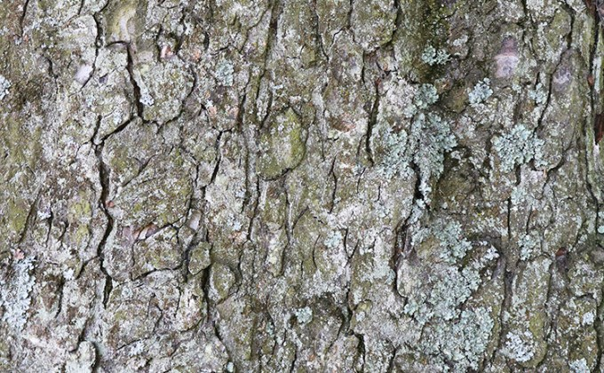 Tree bark free texture set   Creative Nerds