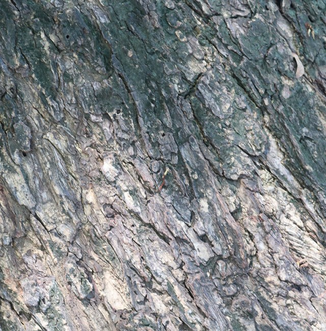 small-close-up-tree-bark-texture.jpg