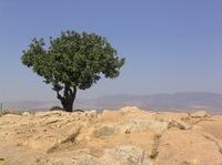 Treeonmtarbellr