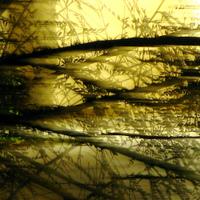 Living_fractal