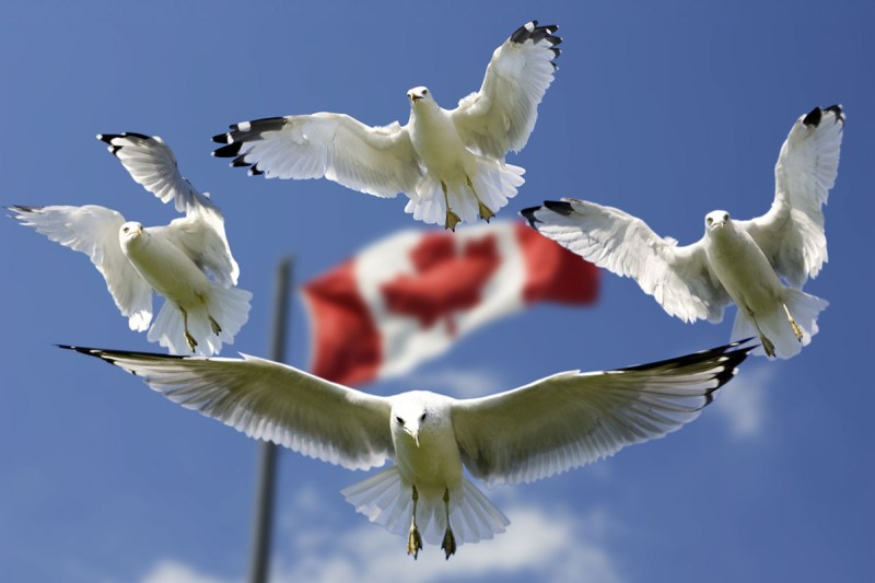 gulls-formation-flag-sky-45874