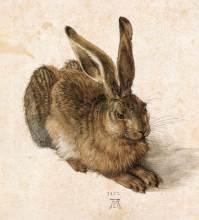 durer, giovane lepre, 1502, vienna, Graphische Sammlung Albertina
