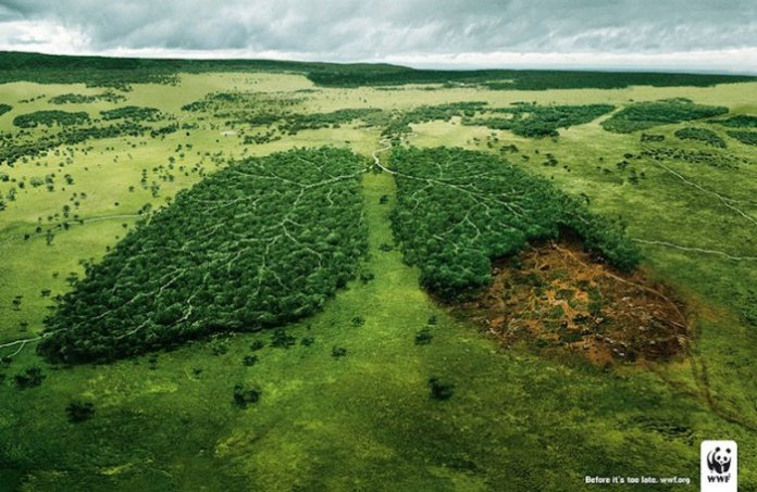 campagne-sensibilisation-deforestation-4