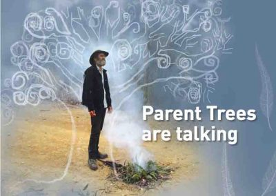 Parent Trees are Talking (Fire Stick Project)