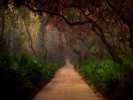 Jack Spencer Photograph of Woodland Path, Cumberland 22