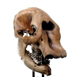 PhotoSpherix Mastodon Head
