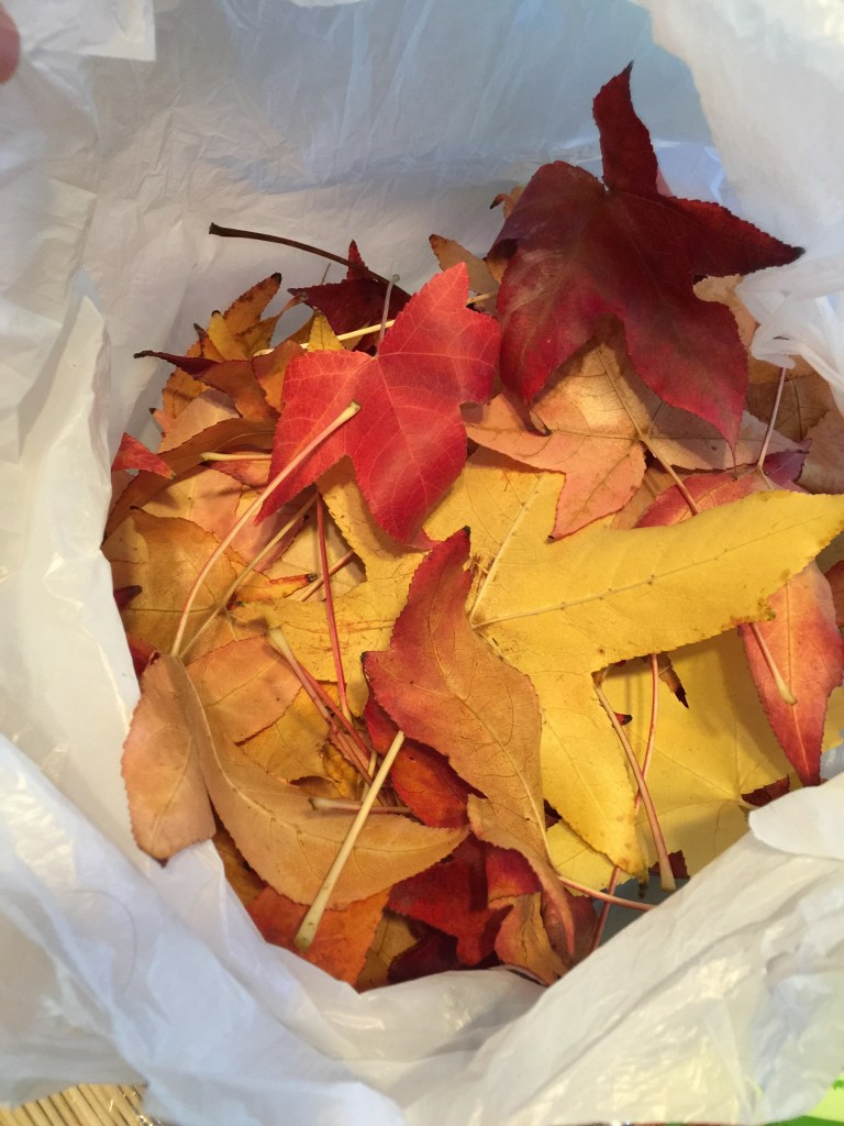 We collected leaves and put them in a plastic bag in the refrigerator.