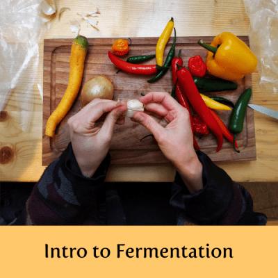 creative-switzerland-fermentation-cooking-classes-creativity-entrepreneurship-lucerne