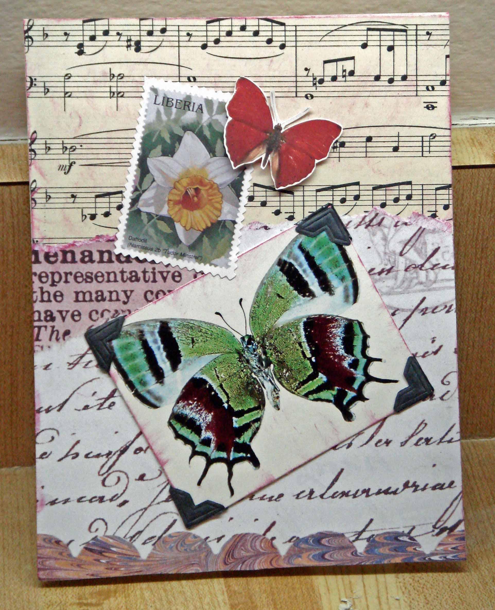 tweety jill butterfly collage