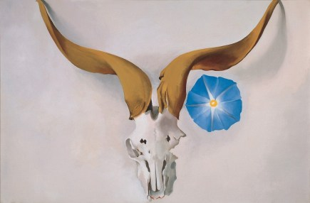 Rams Head Blue Morning Glory