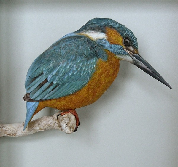 3dbird