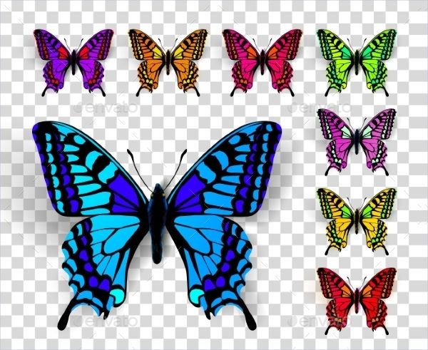 Butterfly on Transparent Background