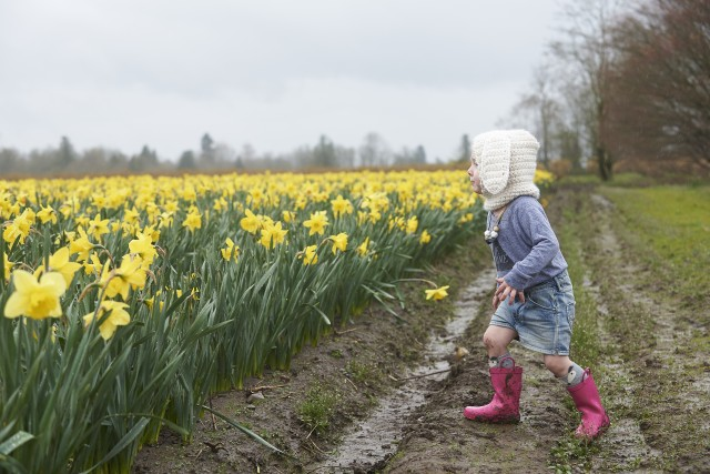 Easter Bunny in the daffodil field by Quantum Images Inc