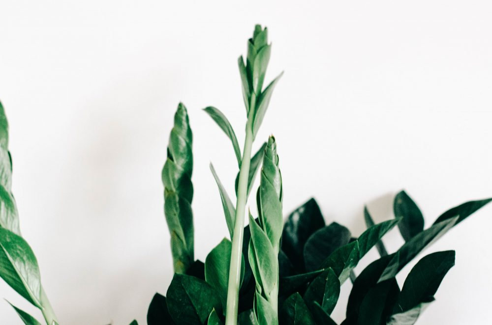 7 House Plants that are Easy to Maintain and Keep Alive