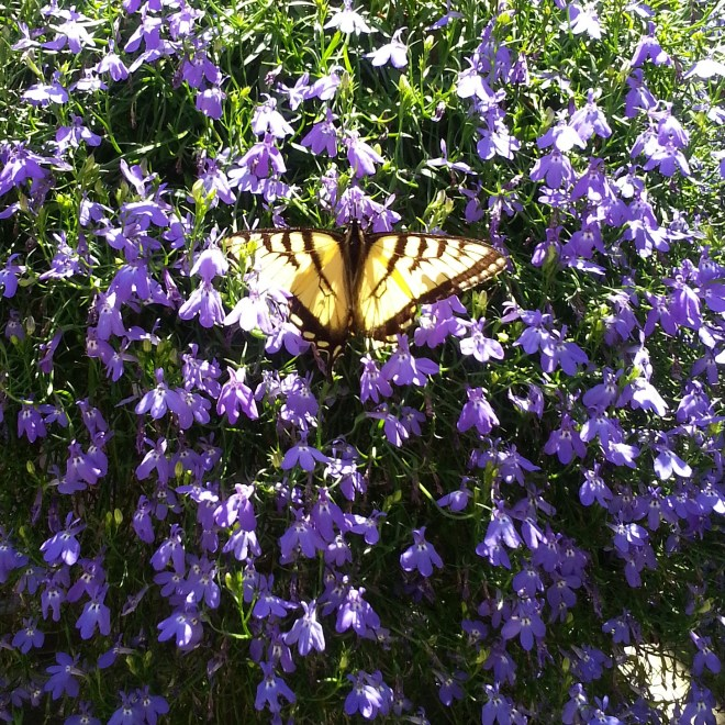 Hanging Flower with Butterfly
