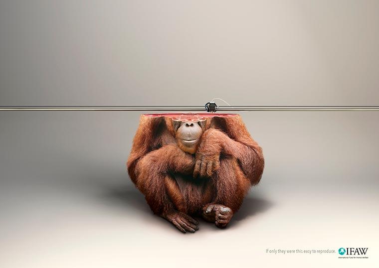campaña disruptiva publicitaria animal