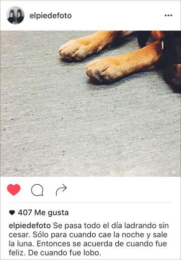 instagram-pie-de-foto-principal