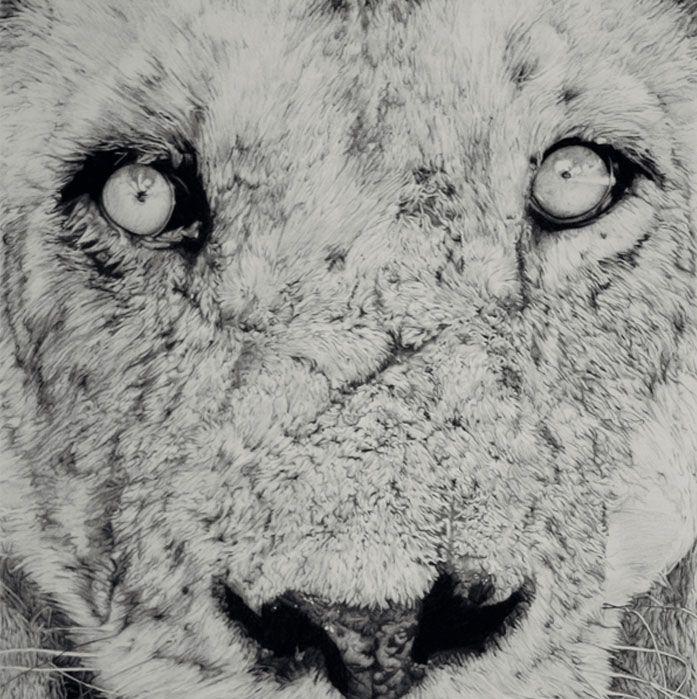 leon paco marmol ilustracion