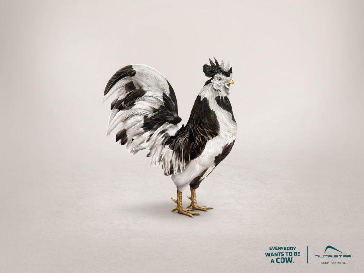 gallina quiero ser una vaca