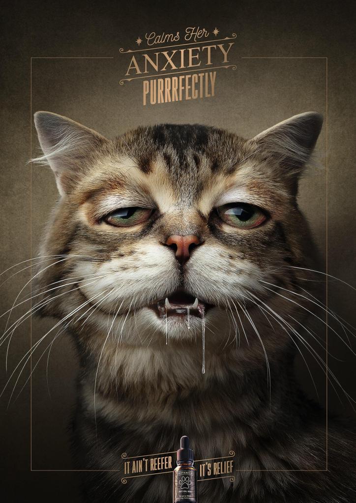 creatividad publicitaria de dolencia de gato