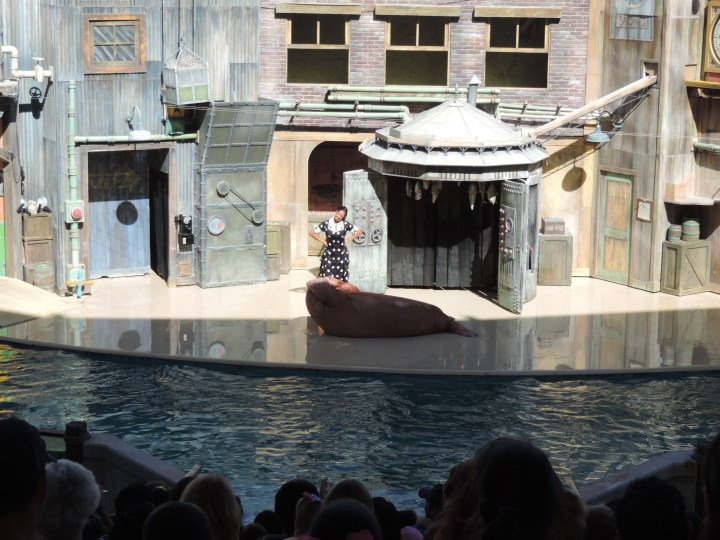 This photo captured my favorite moment in the show. The walrus was doing sit-ups! How amazing is that?