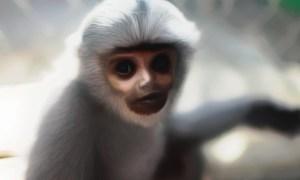 photo of gnome boy